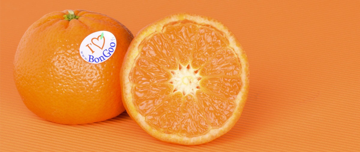 Photo d'une mandarine seedless et easypeeling nadorcott