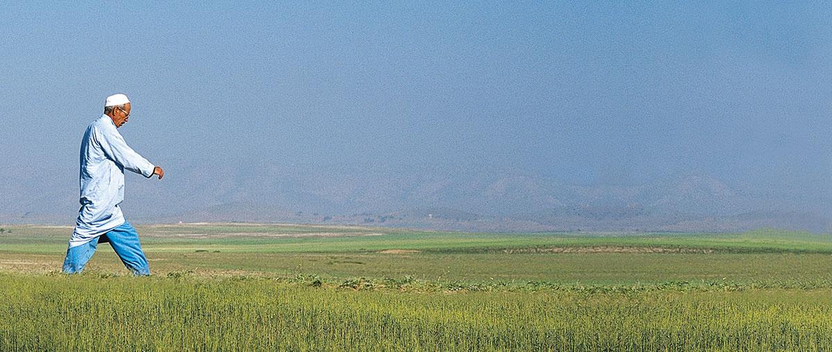 Photo d'un agriculteur marocain dans son champ