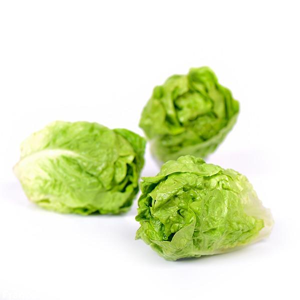 Photo de salades sucrines Idyl