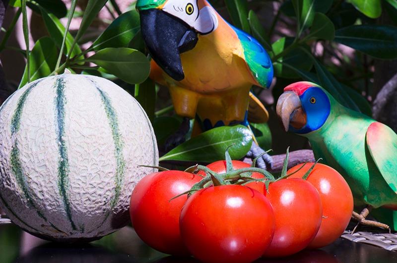 Photo de tomates et melon Idyl