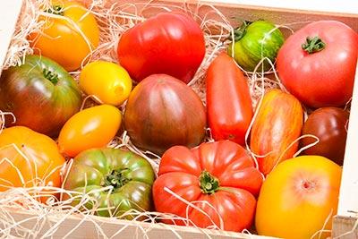 Photo de tomates anciennes Idyl