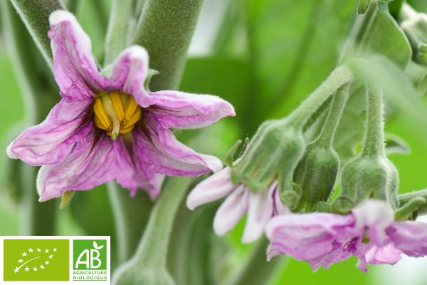 Producteur bio Provence Idyl