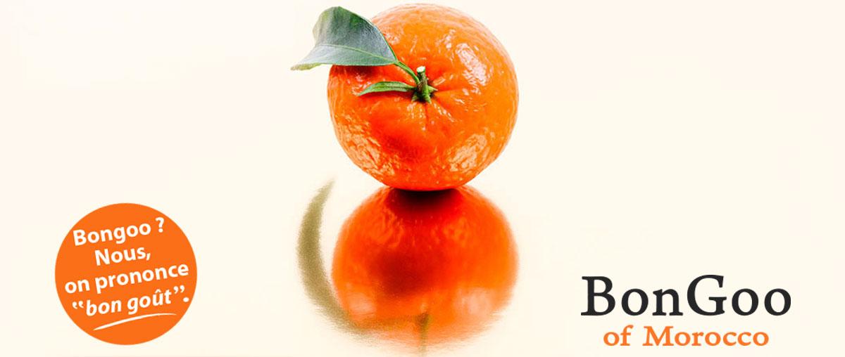 Mandarine Bongoo of Morocco