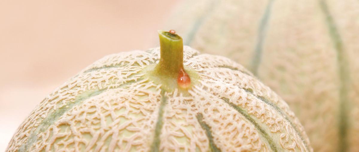 Melon Idyl