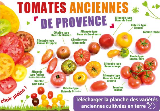 Planche des variétés de tomates anciennes