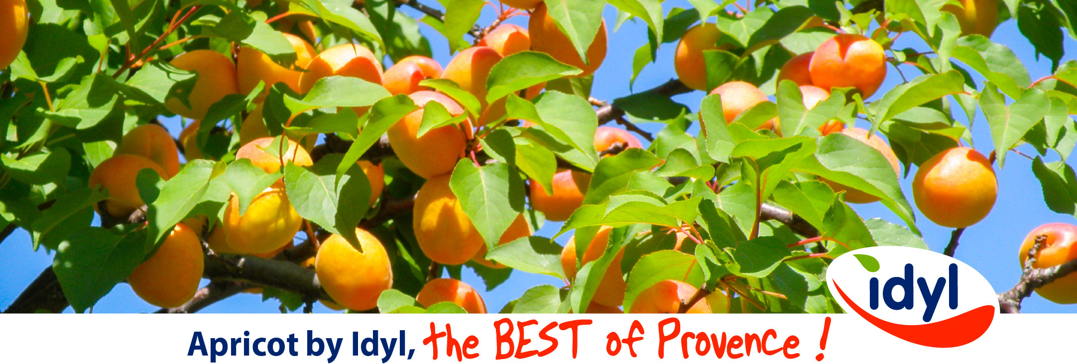Idyl Apricot by idyl the BEST of Provence