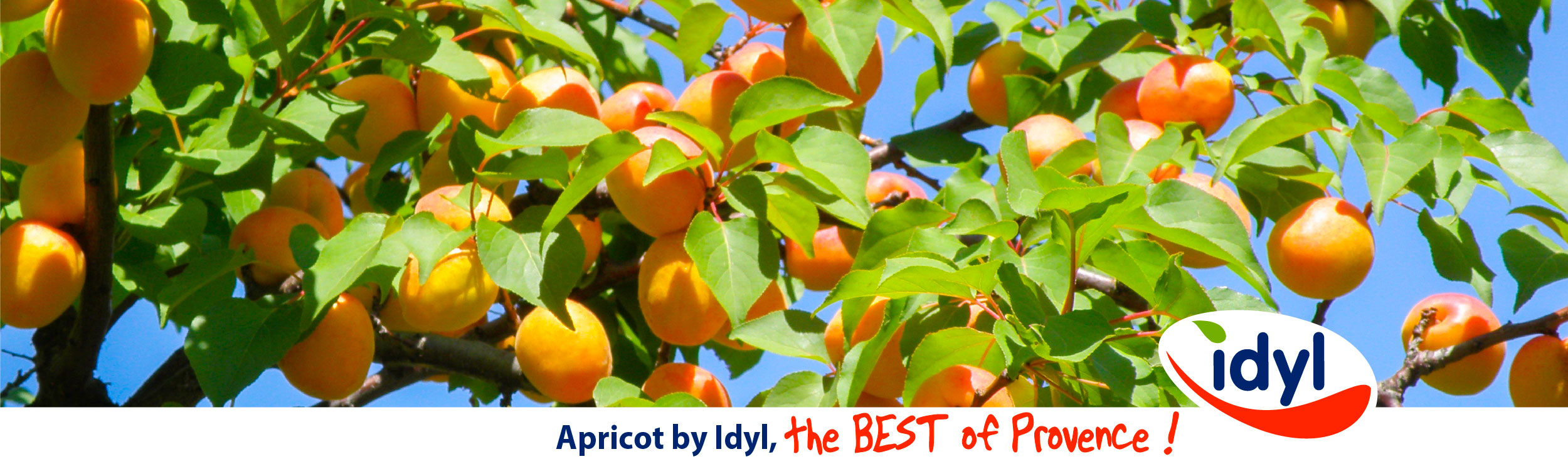 Apricot by idyl the BEST of Provence