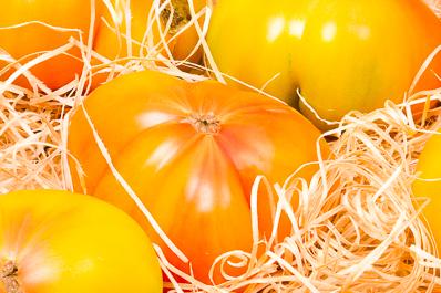 Melon Charentais jaune de Provence Idyl