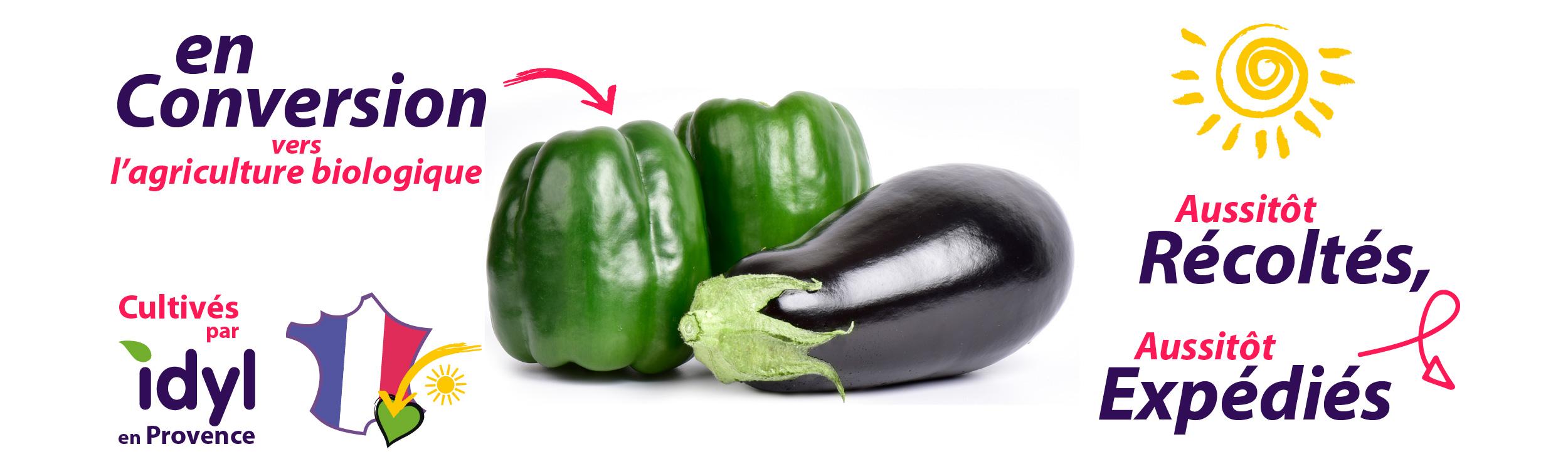 Poivron et aubergine de Provence Idy producteur