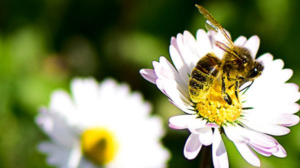 Consignes de Tri abeilles