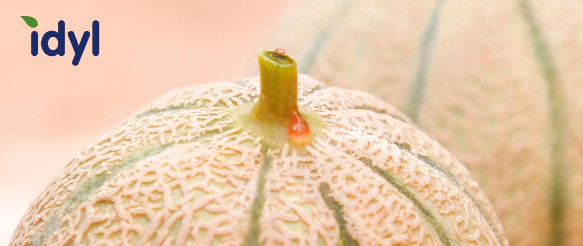 Melon du maroc producteur