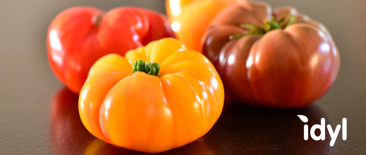 Tomates anciennes de Provence Producteur