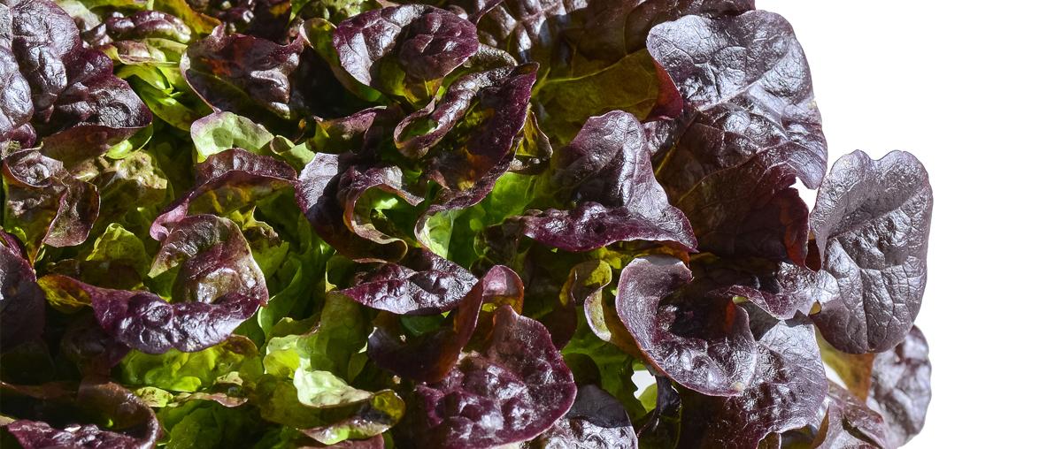 Salades de Provence eva par Idyl