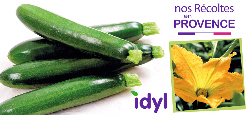 Courgette Idyl Provence