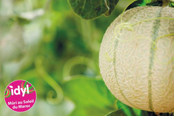 Melon Idyl en Provence