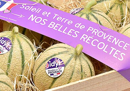 Nos belles récoltes Melon de Provence